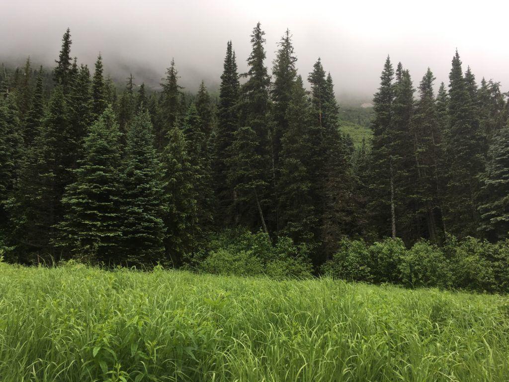 Alaska forest hike