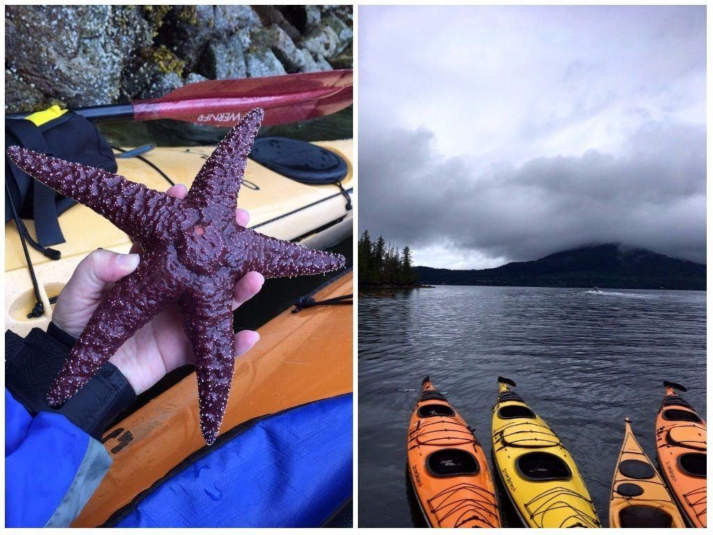 Alaska starfish and kayaks